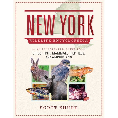 New York State Bird - New York Wildlife Encyclopedia : An Illustrated Guide to Birds, Fish, Mammals, Reptiles, and Amphibians