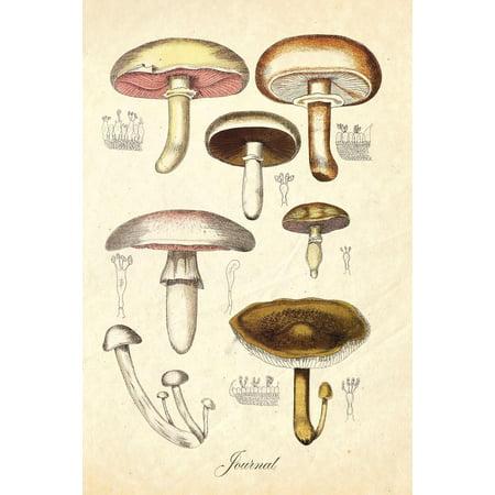 Journal : Vintage Antique Mushroom Botanical Illustration 120 Blank Lined 6x9 College Ruled Pages ()