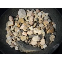 Educational Bulk Fossil Mix Variety pack - 1 pound