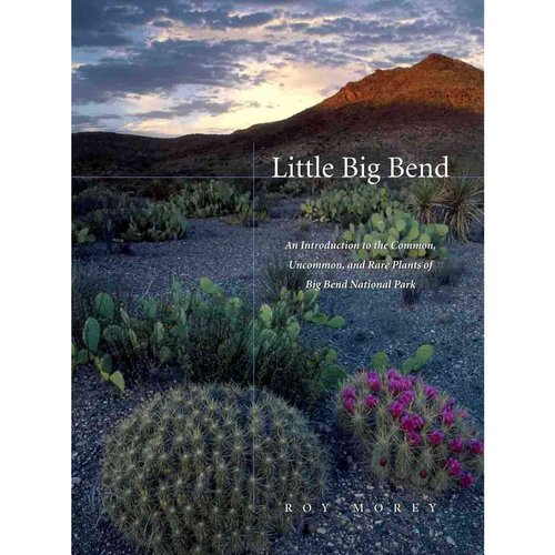 Little Big Bend : Common, Uncommon, and Rare Plants of Big Bend National Park