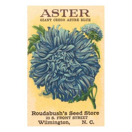 Aster Seed Packet Laminated Print Wall Art