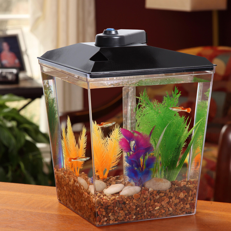 Petsmart automatic feeder kba 4f29 9c3c a36b36652b19 v1 for Automatic fish feeder walmart