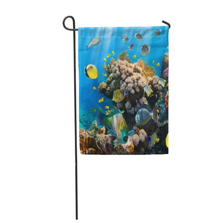 KDAGR Red Underwater of Tropical Fish on Coral Reef Blue Dive Scuba Sea Egypt Garden Flag Decorative Flag House Banner 12x18 inch