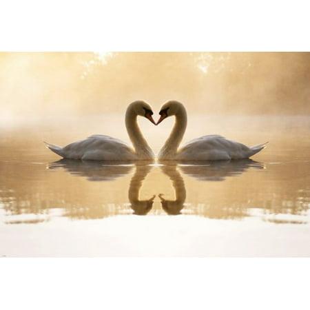 - Lovely Swan Pair On Lake Poster Heart-Shaped Necks Pristine Regal 24X36