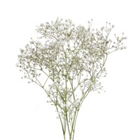 Bloomingmore Natural Fresh Flowers - Baby's Breath, 10 Bunches