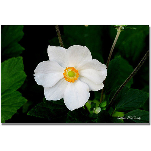 "Trademark Art ""Big White Flower"" Canvas Wall Art by Kathie McCurdy"