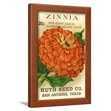 Zinnia Seed Packet Framed Print Wall Art