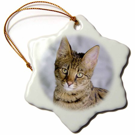 3dRose Savannah cat, Snowflake Ornament, Porcelain, 3-inch