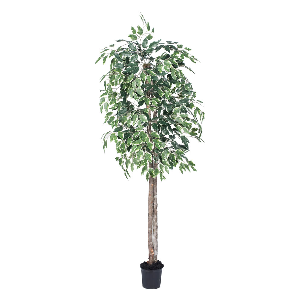 Vickerman 6' Artificial Variegated Ficus Tree in Black Pot