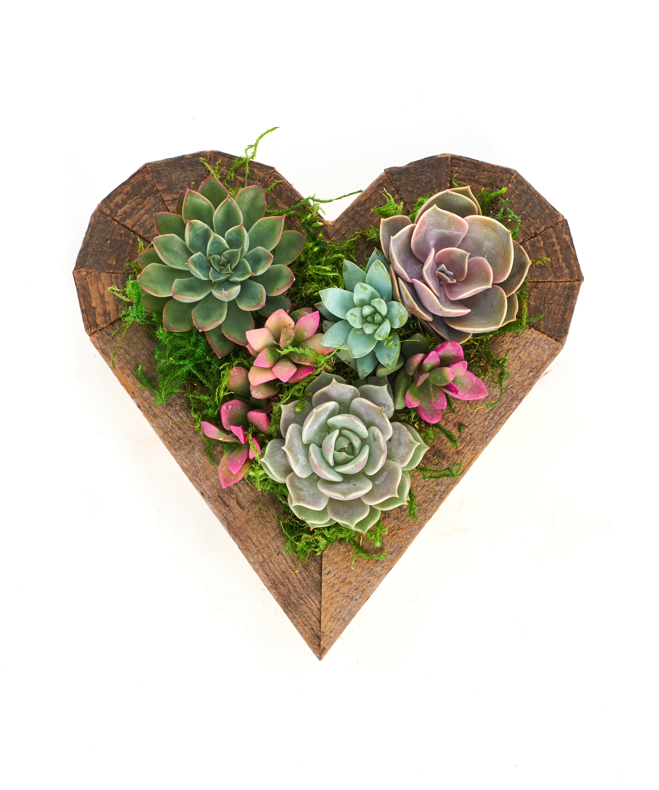 Living Succulent Heart Wood Planter Succulent Centerpiece