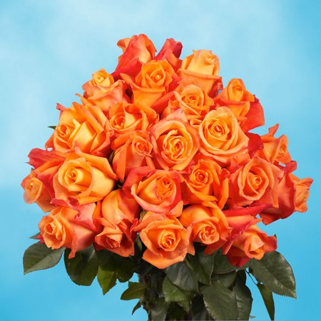 Globalrose 50 Orange Long Stem Roses  Fresh Flowers Express Delivery
