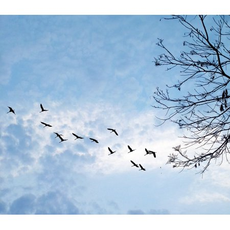 LAMINATED POSTER Nature Tree Against Light Birds West Clouds Poster Print 24 x