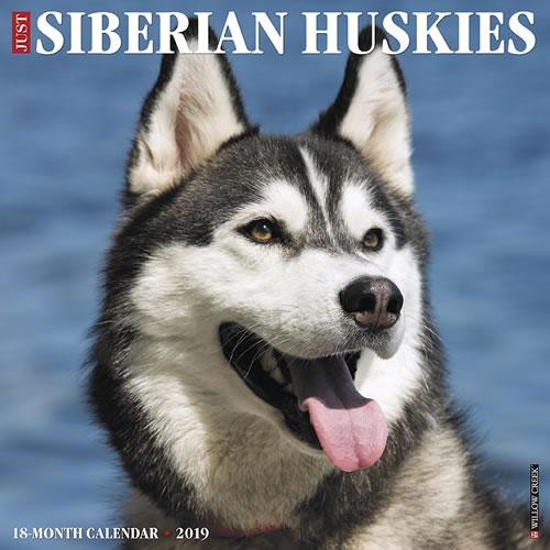 Willow Creek Press 2019 Just Siberian Huskies Wall Calendar