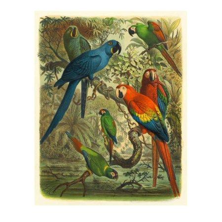 Tropical Birds III Laminated Print Wall Art By Cassel ()