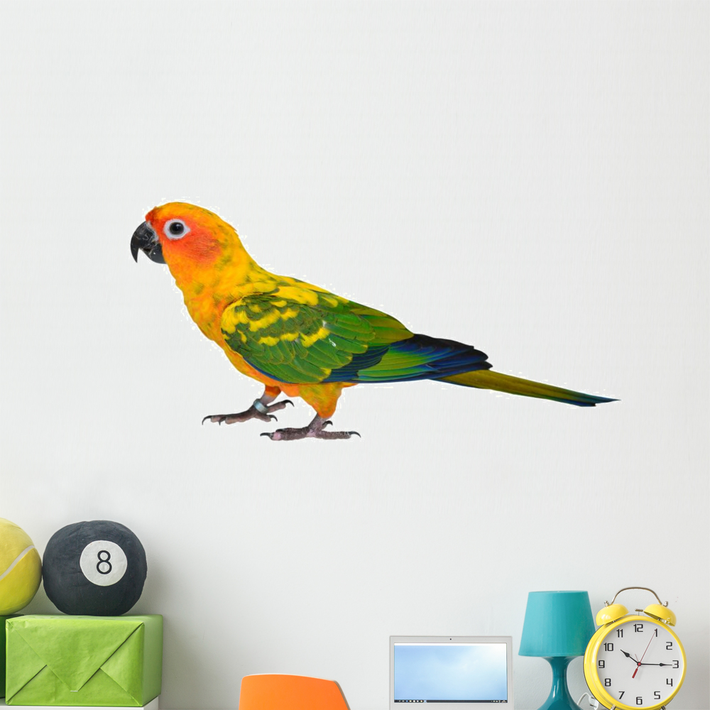 Sun Conure Parrot Bird Wall Decal By Wallmonkeys Peel And Stick