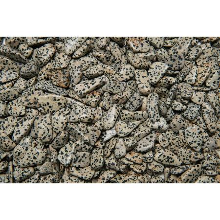 Fantasia Crystal Vault: 1/2 lb High Grade Dalmatian Jasper Tumbled Stones - Small - 0.75
