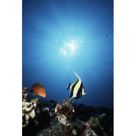 USA With Sunburst Hawaii Tropical Fish On Reef (Tropical Fish Island)