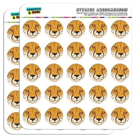 Cheetah Face Safari 1