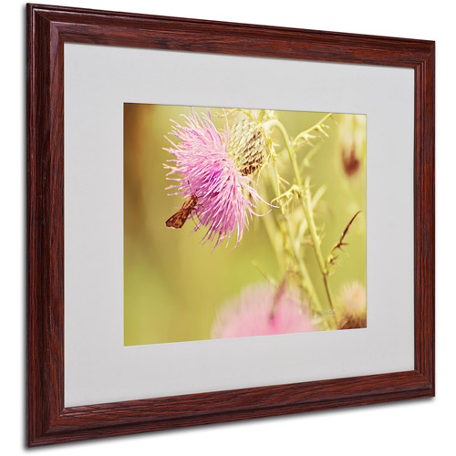 "Trademark Fine Art ""Skipper On Pink Thistle"" by Lois Bryan, Wood Frame"