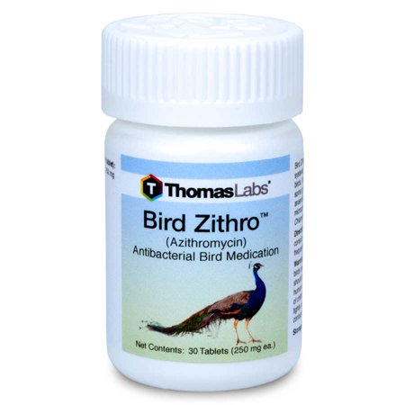 Bird zithro azithromycin 250mg tablets 30 tablets for Fish antibiotics azithromycin