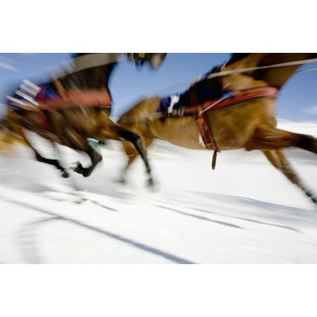 Sti Race - Ski Joring Race Stretched Canvas - Vicki Couchman  Design Pics (38 x 24)
