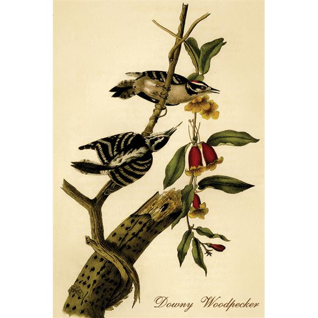 Buy Enlarge 0-587-64762-LP20x30 Downy Woodpecker- Paper Size P20x30