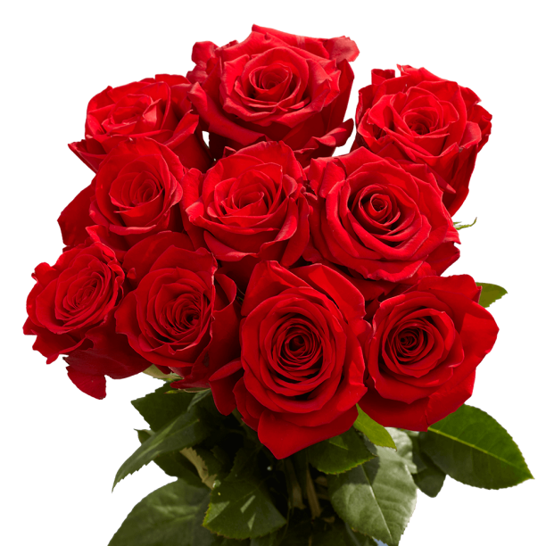 Globalrose 50 Red Large Bloom Roses