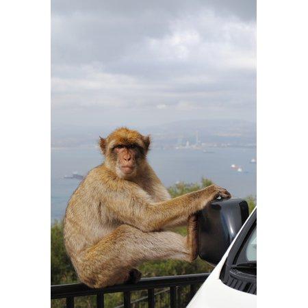 Monkey Rock (LAMINATED POSTER Monkey Rock Spain England Gibraltar Poster Print 24 x 36 )