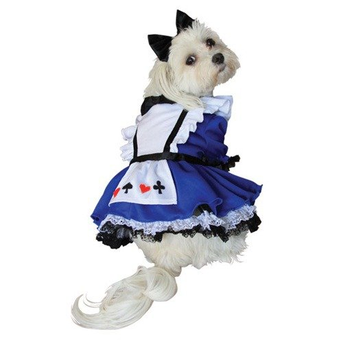 Anit Accessories Alice in Wonderland Dog Costume