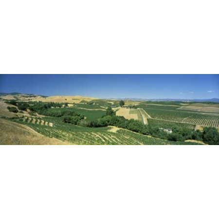 High angle view of a vineyard Carneros District Napa Valley Napa County California USA Poster Print - Usa Nap