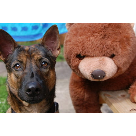 LAMINATED POSTER Best Friends Dog Animal Plush Toy Bear Cuddly Toy Poster Print 24 x