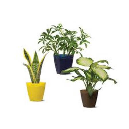 """Image of P Garden 4"""" Foliage Assorted"""