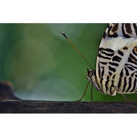Canvas Print Nature Butterfly Insect Flying Wings Animal Wing Stretched Canvas 10 x 14