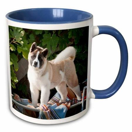 Akita Porcelain - 3dRose Akita dog with blanket and toy - US05 ZMU0038 - Zandria Muench Beraldo - Two Tone Blue Mug, 11-ounce