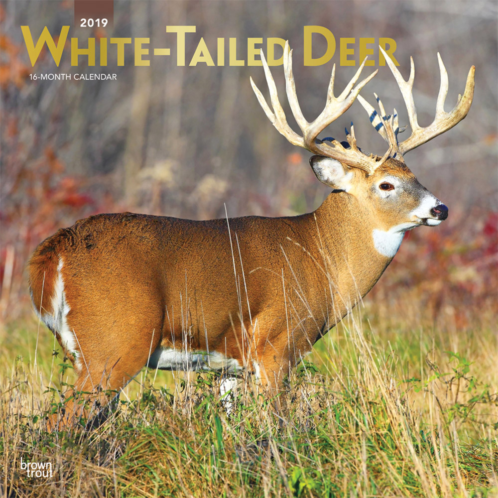 White Tailed Deer 2019 12 x 12 Inch Monthly Square Wall Calendar with Foil Stamped Cover, Wildlife Animals Forest Hunting
