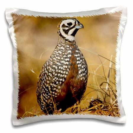 3dRose Montezuma Quail male bird, Davis Mountains, Texas USA - US44 LDI0983 - Larry Ditto - Pillow Case, 16 by