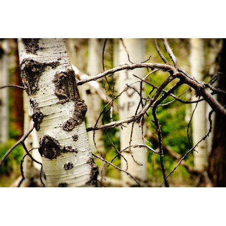 Tree Bark Carving (LAMINATED POSTER Mountains Forest Bark Carved Initials Trees Hills Poster Print 24 x)