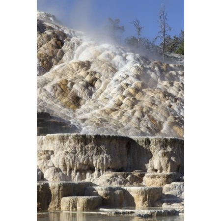 Palette spring and travertine sinter terraces Mammoth Hot Springs Yellowstone National Park Stretched Canvas - Richard RoscoeStocktrek Images (12 x 18) - Hot Springs Yellowstone National Park