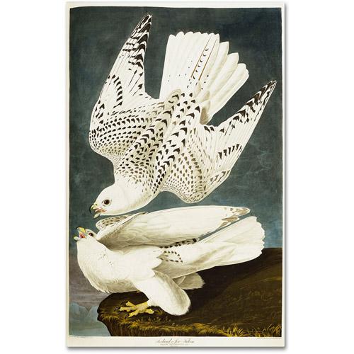 "Trademark Fine Art ""Iceland or Jer Falcon"" Canvas Art by John James Audubon"