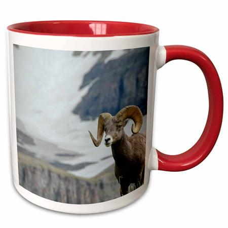 3dRose Big Horn Rams in the wildflowers, Mount Timpanogos, Utah. - Two Tone Red Mug, 11-ounce