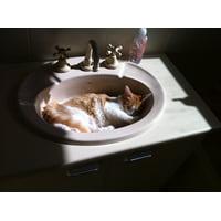 Canvas Print Feline Kitten Pet Sleeping Cat Basin Wash-Bowl Stretched Canvas 32 x 24