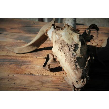 LAMINATED POSTER Halloween Ritual Esoteric Goat Skull Satanism Poster Print 24 x 36 (Halloween And Satanism)