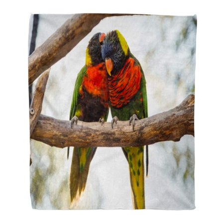 559 Sofa - ASHLEIGH Throw Blanket Warm Cozy Print Flannel Two Parrots Love Birds in Kiss Each Other While Perched on Tree Comfortable Soft for Bed Sofa and Couch 58x80 Inches