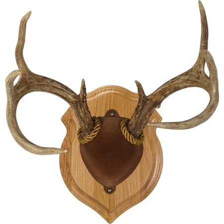 Walnut Hollow Country Deluxe Antler Display Kit in Solid Oak for Whitetail Deer & Mule Deer Antlers