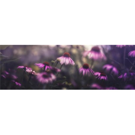 Purple Blossoms - Prague Czech Republic Poster Print - 36 x 13 in. - Large - image 1 of 1