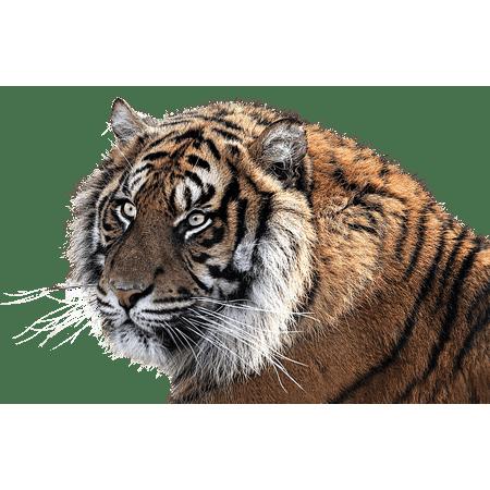 Framed Art For Your Wall Feline Tiger Png Animal Tiger Head 10x13 Frame (Halloween Frame Png)