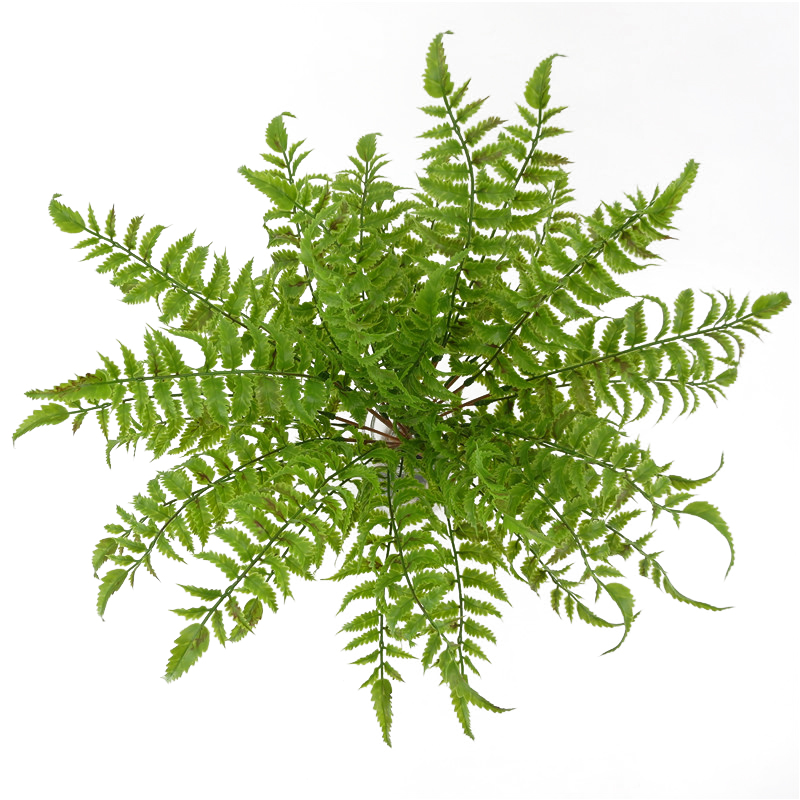 Artificial Grass Fake Fern Plants with Leaves for Party Outdoor Decor Bonsai
