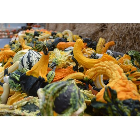 Canvas Print Autumn Halloween Fall Gourds Harvest Decoration Stretched Canvas 32 x 24