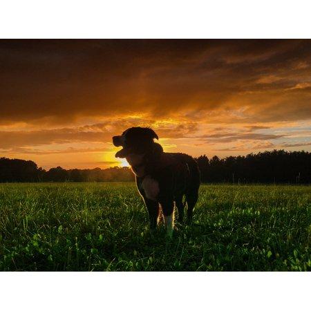 Point Hybrid (Canvas Print Dog Autumn Hybrid Nature Animal Sun Forest Pet Stretched Canvas 10 x 14)