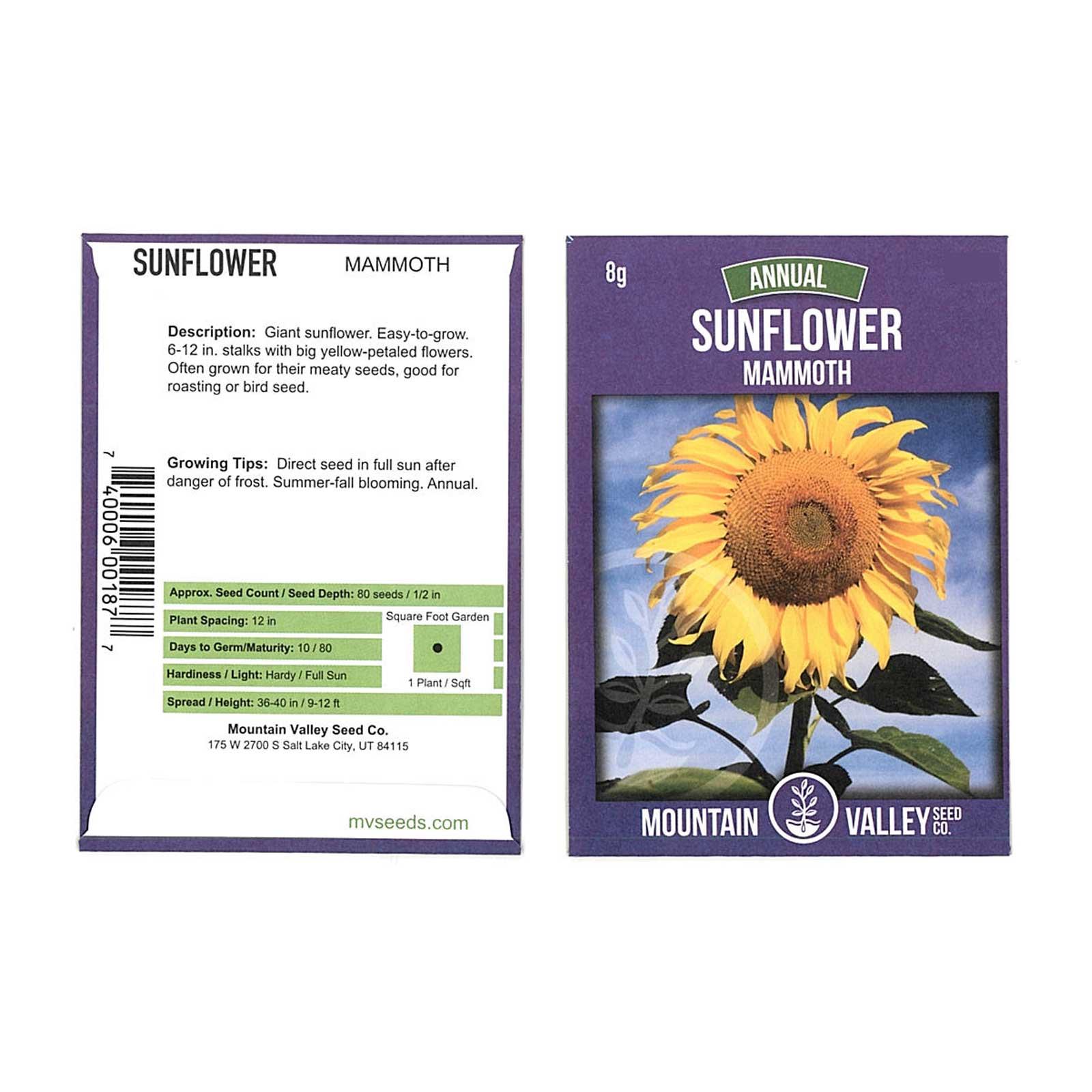 Sunflower Garden Seeds - Mammoth Grey Stripe - 8 Gram Packet - Annual Sun Flower Gardening Seeds - Gray